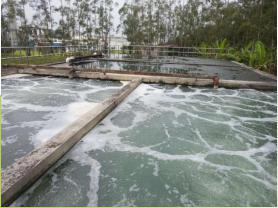 自然生态净水系统