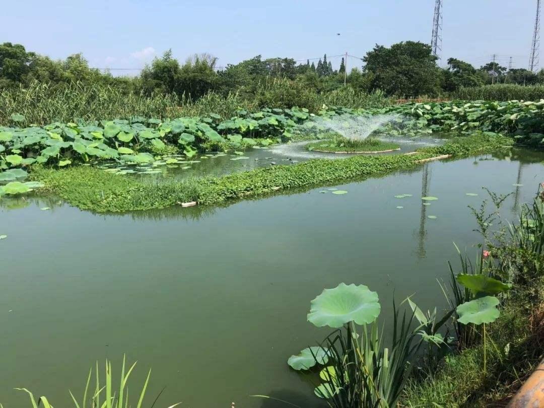生态净水系统